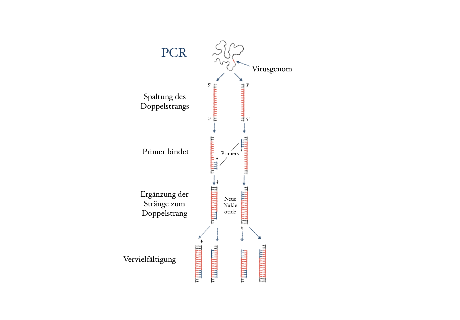 Funktionsweise PCR